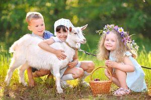 Hiểu đúng về các loại sữa dê trên thị trường để có lựa chọn tốt nhất cho bé