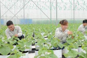 'Song hỷ lâm môn' ông Nguyễn Duy Hưng thành công cả mảng nông nghiệp
