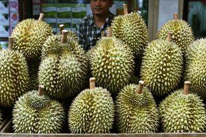 Sầu riêng giống hiếm được bán giá 1.000 USD/quả ở Indonesia
