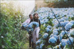 Những loại hoa đẹp chơi Tết nhưng có chất độc với bà bầu, trẻ nhỏ