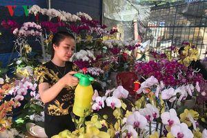 Rộn ràng chợ hoa xuân Buôn Ma Thuột
