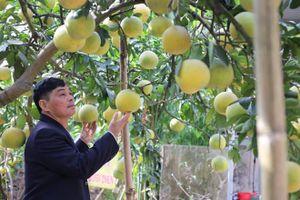 Mở rộng vùng trồng cây ăn quả đặc sản