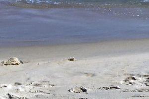 Quảng Nam: Thả một cá thể rùa xanh về biển