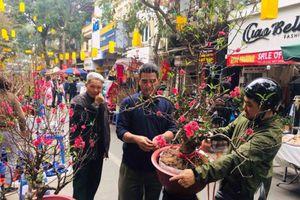 Dạo chợ hoa chỉ họp một lần duy nhất trong năm