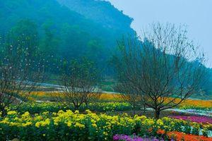 Ngắm thung lũng hoa tuyệt đẹp chuẩn bị chào đón du khách đến Lễ hội hoa Xuân Bái Đính 2019
