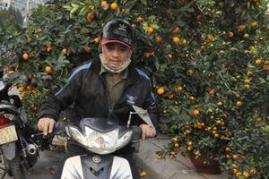 Quảng Ninh: Chở thuê đào, quất Tết, 'hái' ngon ơ tiền triệu/ngày