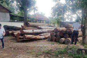 Nghiêm trị những người tiếp tay phá rừng