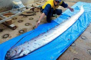 Nhiều 'rồng biển' dạt bờ, dân Nhật lo sóng thần sắp ập tới