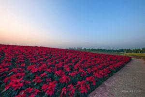 Hãy cho trẻ cơ hội khám phá hoa cỏ thiên nhiên dịp Tết