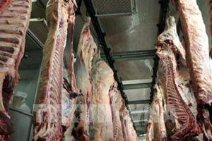 Gần 800 kg thịt bò 'bẩn' được tuồn vào Pháp