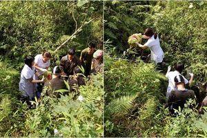 Cuộc vượt cạn hy hữu ngày cuối năm: Sản phụ rơi xuống núi suối sâu 10m, được bác sĩ đỡ đẻ ngay giữa rừng