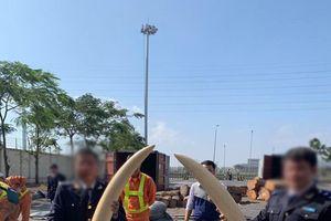 Bắt giữ lô hàng hơn 1 tấn ngà voi, vảy tê tê ngụy trang trong các container