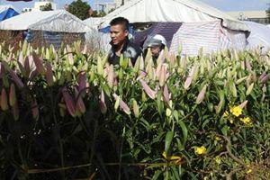 Rực rỡ 17 ngàn gốc hoa Lily, Tulip ở xứ sở nắng gió