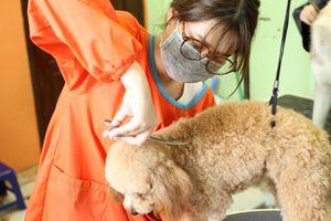 'Khách sạn' cho chó mèo ở Sài Gòn 500.000 đồng/ngày vẫn cháy phòng