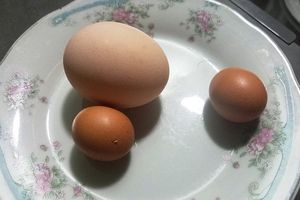 Kon Tum: Gà trống đẻ trứng ngày cận Tết