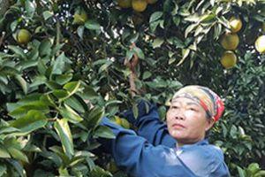 Mùa xuân 'đếm tiền mỏi tay' của các tỷ phú cam Cao Phong