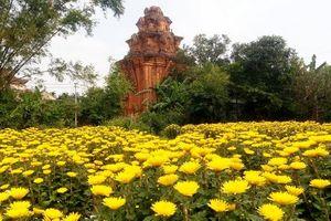 Người dân Bình Định bội thu mùa hoa Tết