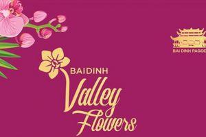 Lễ hội hoa Xuân Bái Đính 2019 tại Thung lũng hoa Bái Đính