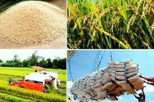'Hạt gạo làng ta'… gửi ra thế giới