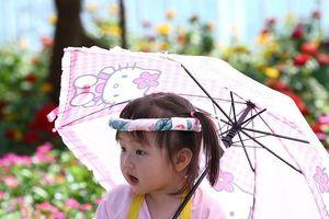 Mùng 3 Tết, hàng ngàn người Đà Nẵng vãn cảnh chùa, du xuân đường hoa