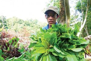Vị ngọt rau rừng Thất Sơn