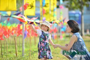 Lạ mắt ngắm khu vườn chong chóng đầy màu sắc duy nhất tại Hà Nội