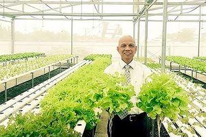 Doanh nhân Việt kiều Úc trồng rau thủy canh ở Sài Gòn