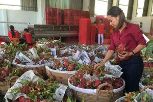 Tất bật xuất khẩu trái cây đầu năm mới