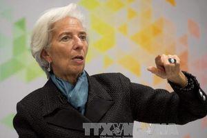 Tổng Giám đốc IMF cảnh báo nợ công ở các nước Arab tăng lên nhanh chóng