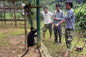 Bệnh viện cho động vật hoang dã