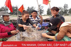 Ngư dân Hà Tĩnh ra biển sớm, kiếm tiền triệu mỗi ngày