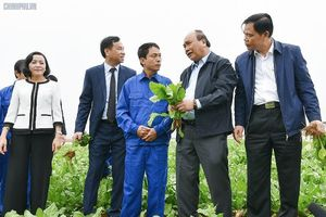 Thủ tướng 'xông đất' ngành nông nghiệp năm Kỷ Hợi