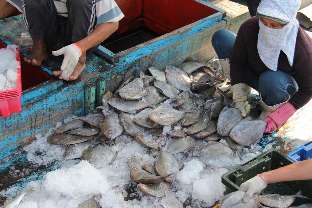 Ngư dân miền Trung: Bội thu 'lộc biển' đầu năm