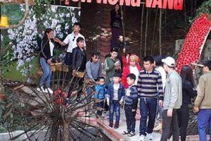 Rừng vàng Sơn La hút khách du lịch đầu xuân