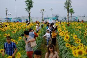 Tác giả vườn hoa hướng dương gây sốt ở TP HCM kể chuyện khởi nghiệp