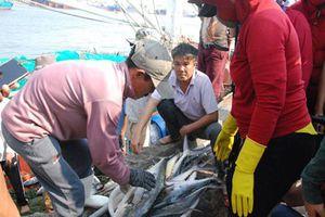 Trúng mẻ cá 'khủng' 100 tấn ngày đầu năm, thu về gần 6 tỷ đồng