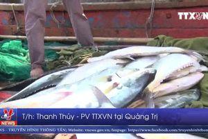 Lộc biển đầu năm – Kỳ vọng mới bội thu với ngư dân Quảng Trị