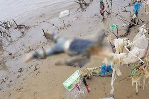 Thanh Hóa: Phát hiện thi thể phụ nữ đang phân hủy mang theo tiền ngoại tệ trôi dạt vào bờ biển