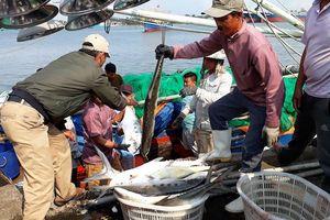 Quảng Trị: Tàu của ngư dân trúng mẻ cá hơn 7 tỷ đồng