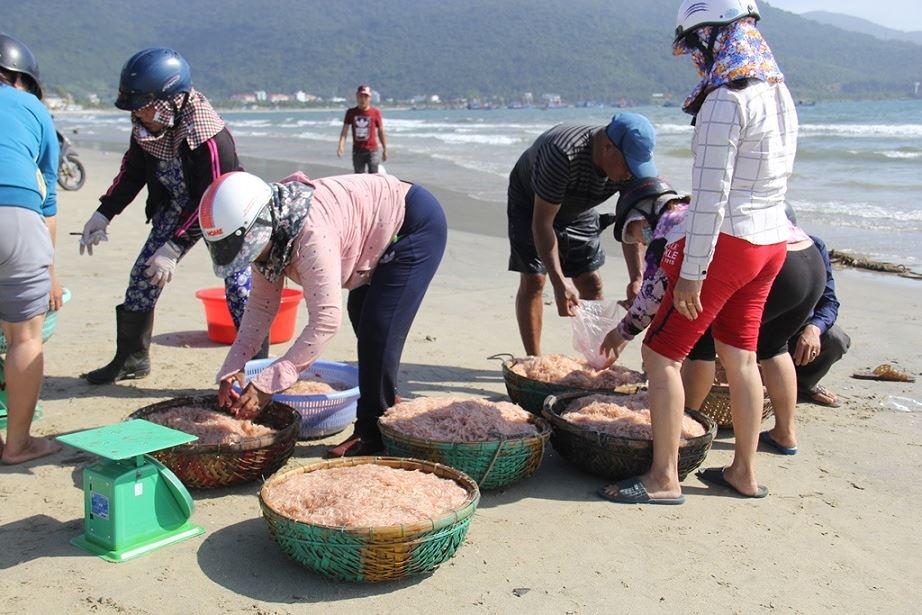Trúng lộc ruốc, ngư dân Đà Nẵng kiếm bạc triệu mỗi ngày