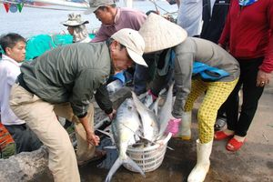 Ngư dân trúng đậm cá bè trong những ngày đầu năm mới