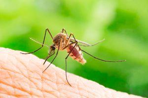 Thuốc 'ăn kiêng' dành cho muỗi ngăn cản chúng hút máu người
