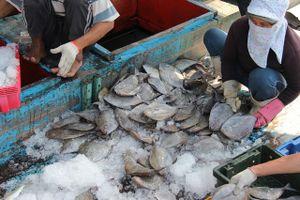 Ngư dân Đà Nẵng đón 'lộc biển' đầu năm