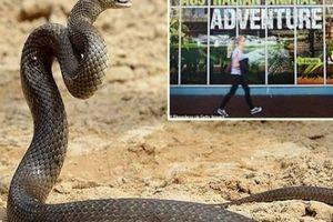 Valentine, sở thú cho phép du khách đặt tên người yêu cũ cho loài rắn độc nhất