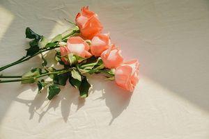 20 lời chúc Valentine bằng tiếng Anh ngọt ngào và lãng mạn khiến nửa kia 'phát cuồng' vì bạn