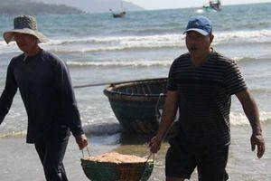 Ngư dân miền Trung hốt bạc triệu mỗi ngày nhờ ruốc biển đầu năm