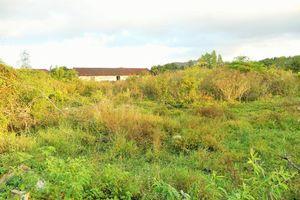 Tây Sơn (Bình Định): Đất 'vàng' bị bỏ hoang
