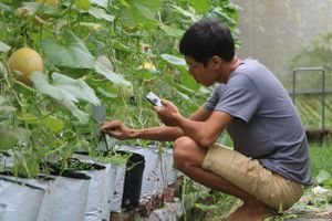 Thanh niên 9X và giấc mơ phát triển nông nghiệp công nghệ cao ở vùng biên