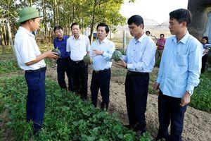 Lãnh đạo thành phố Ninh Bình làm việc với các xã, phường về việc ứng dụng công nghệ cao sản xuất rau, hoa