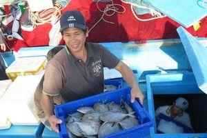 Tàu cá miền Trung nối đuôi nhau cập cảng: Được mùa, được giá